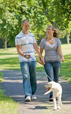 beginning a successful dog walking routine