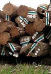 Stack of Teak logs